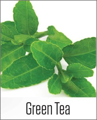 MOA Green Tea