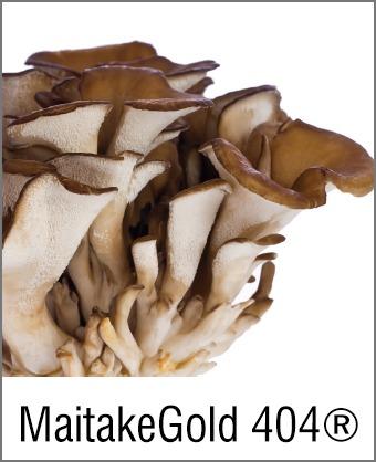 MOA Maitake Gold 400
