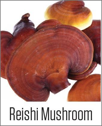 MOA Reishi Mushroom