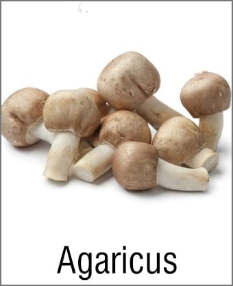 MOA Agaricus