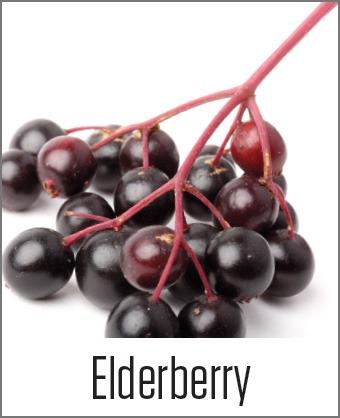 MOA Elderberry