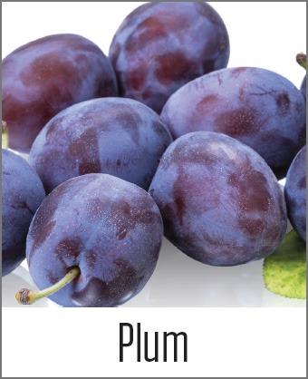 MOA Plum