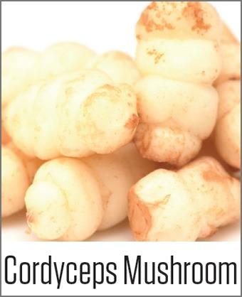 MOA Cordyceps Mushroom